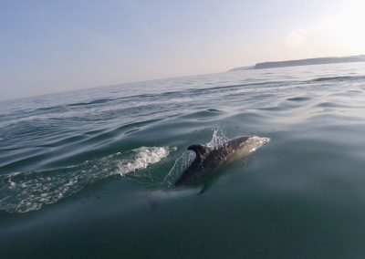 Amazing Dolphins swimming with our skis in Torbay